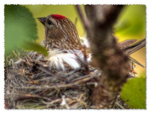 птичка высиживает птенцов